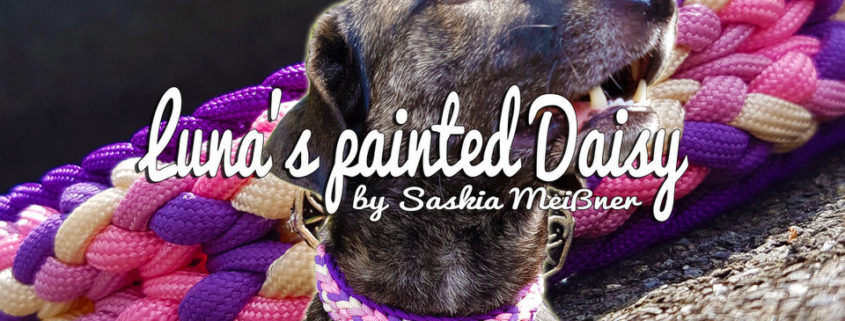 Luna's painted Daisy