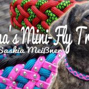 Luna's Mini-Fly Trap
