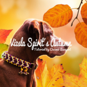 Vizsla Spirit´s Autumn